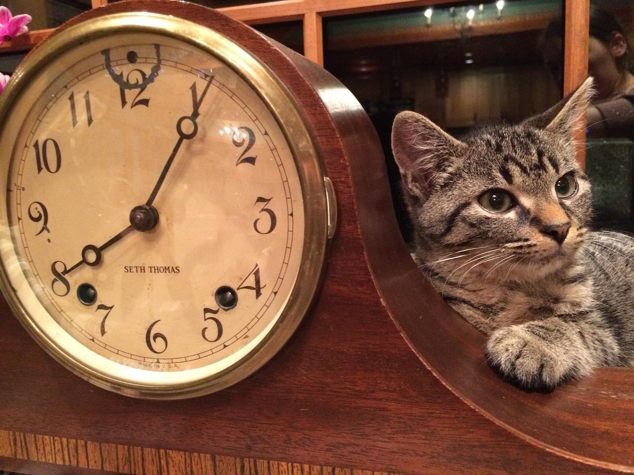 gato lúcido con reloj